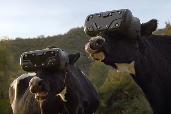 Chick-fil-A Cowz Unveil Virtual Reality Customer Experiences